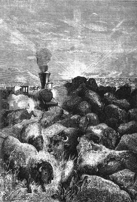 Un troupeau de dix à douze mille têtes barra le rail-road.
