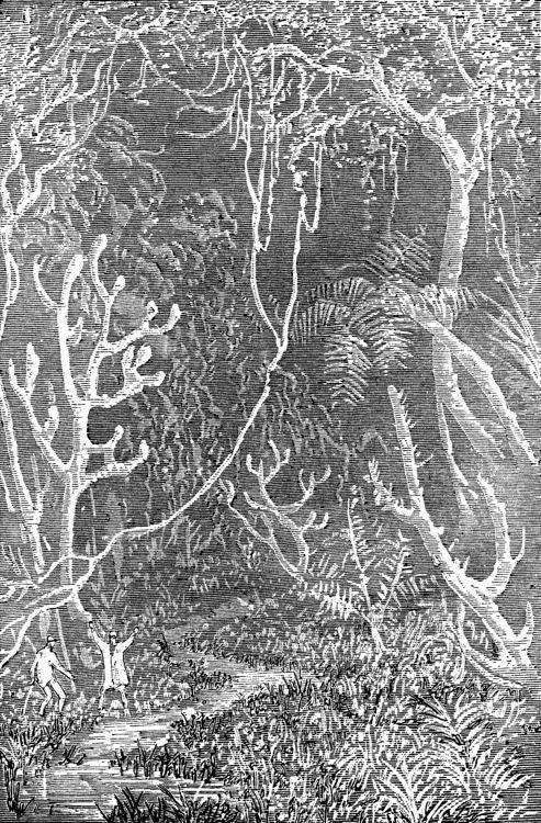 Era la vegetación de la época terciaria en toda su magnificencia